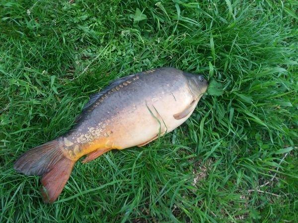 У Тернополі на ставі спіймали гігантську рибину (ФОТО, ВІДЕО)