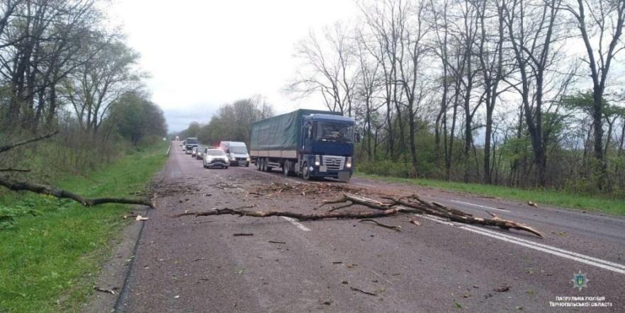 Негода на Тернопільщині: дерева падають на дорогу і перекривають рух (ФОТО)