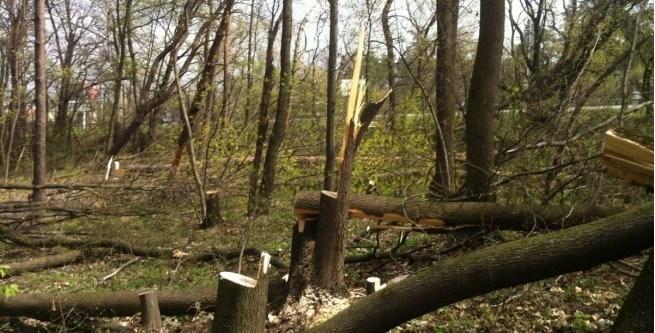 На Тернопільщині чоловіки зрубали дерева на території заповідника