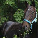 На Тернопільщині кінь покусав чоловіка: потерпілий у реанімації