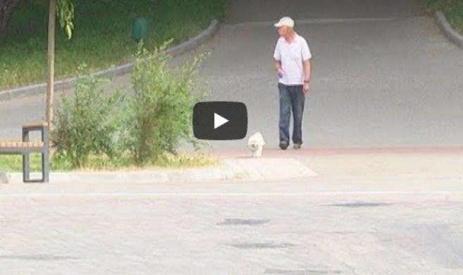 Власники собак у Тернополі кожного дня порушують законодавство (ВІДЕО)