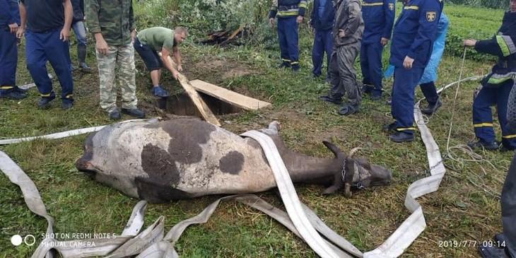 На Тернопільщині рятували корову, яка потрапила у криницю (ФОТО)