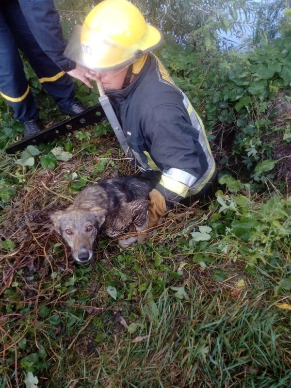 На Тернопільщині у колодязь упала тварина (ФОТО)