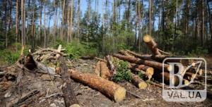 На Тернопільщині знову побачили вирубаний ліс. Розпочали слідство
