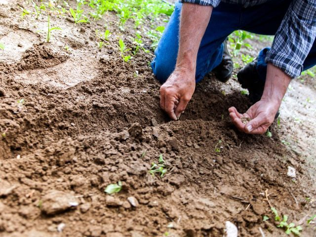 Конфлікт інтересів: на Тернопільщині сільська рада виділила 2 га землі