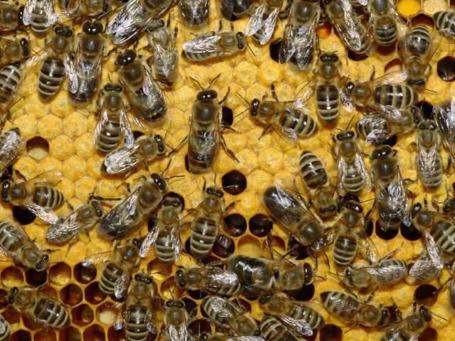 На тернополянина напали агресивні комахи