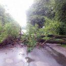 Сильні пориви вітру: в Україні оголосили штормове попередження. Де чекати негоду