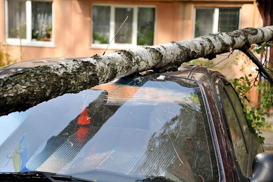 У Тернополі дерево розтрощило автомобіль: ремонт коштує від 1000 доларів (ФОТО)