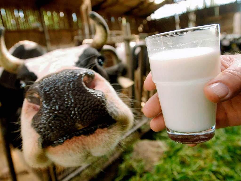 """На Бучаччині працівник ферми крав молоко: спіймали на """"гарячому"""""""