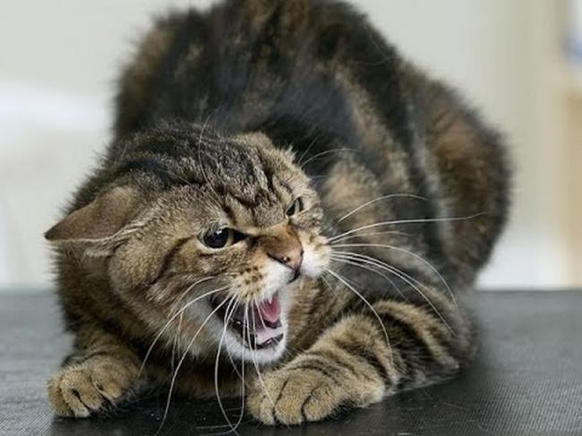 Сказ на Тернопільщині: кіт жорстоко покалічив своїх господарів
