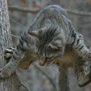 """""""Героїчний порятунок"""": у Тернополі рятувальники допомогли шокованому коту (ВІДЕО)"""
