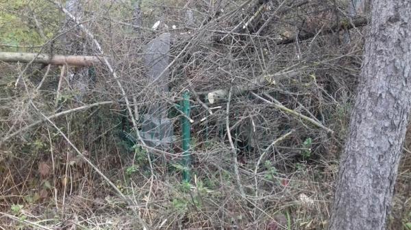 Не робота, а вандалізм: на Тернопільщині комунальники завалили купою гілля людські могили (ФОТО)