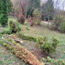 Не люди, а монстри: у Тернополі вандали поламали дерева у парку (ФОТО)