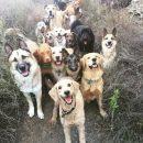 Помирали в муках: у центрі міста потруїли собак