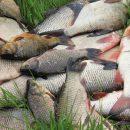 На Тернопільщині розводили рибу на городі