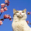 Весна посеред зими: на Тернопільщині буде ще тепліше?