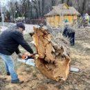 У Тернополі зрізають сухі та аварійні дерева