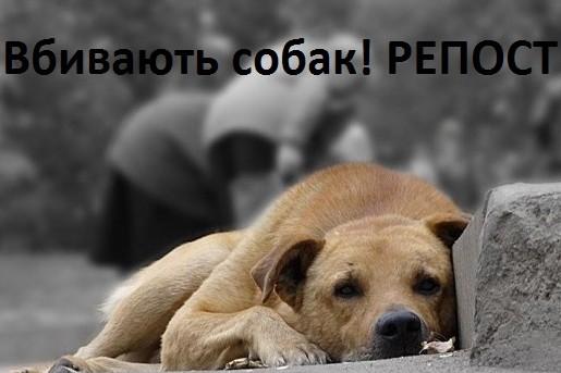"""""""Люди не мовчіть"""": на Тернопільщині з'явились маньяки, які насолоджуються муками тварин"""
