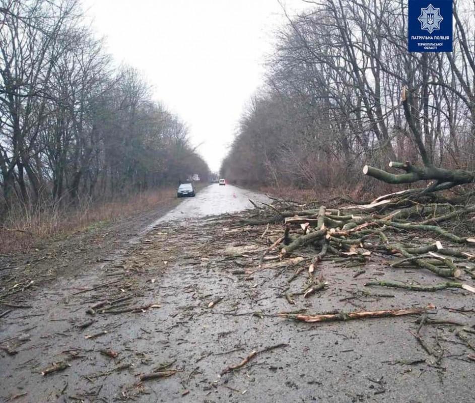 На Тернопільщині під час руху на автівки впало дерево (ФОТО)