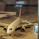 """Загрози здоров'ю громадян нема: літак з евакуйованими з Ухані людьми приземлився в """"Борисполі"""" (ФОТО)"""