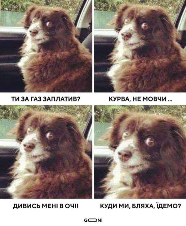 """У соцмережах тролять """"Слугу народу"""" за пораду пенсіонерці продати собаку. Підбірка фотожаб і мемів"""