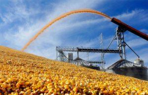 На Тернопільщині перерахували запаси зерна
