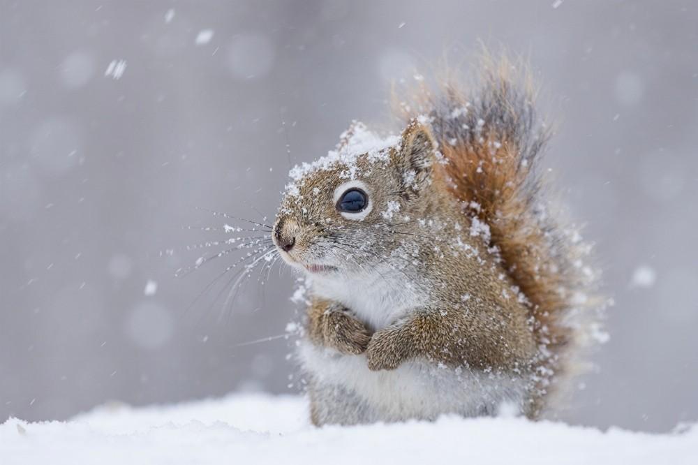 На Тернопільщину йде новий циклон зі снігопадами