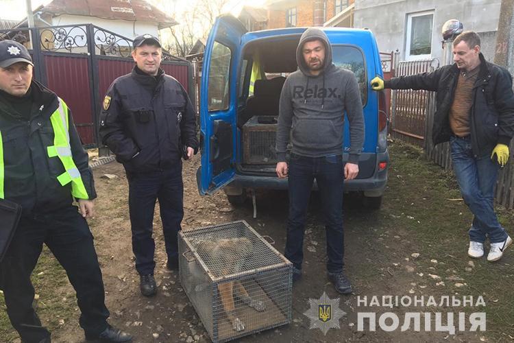 Поліцейські перевірили допис про жорстоке поводження з твариною на Тернопільщині (ФОТО)