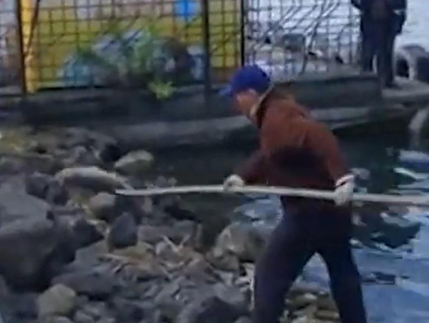 У тернопільському ставі гине велика риба (ВІДЕО)