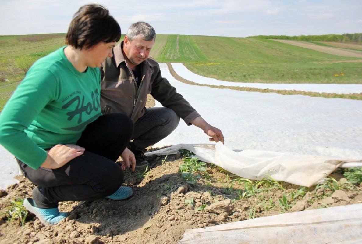 Двоє вчителів з Тернопільщини показали на власному досвіді, як потрібно працювати на землі, аби не їздити за кордон (ФОТО)