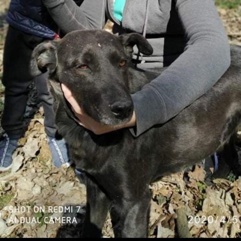 Прокололи ребра вилами: на Тернопільщині нелюди намагалися убити собаку (ФОТО)