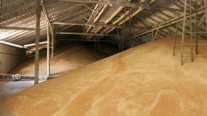 На Тернопільщині зникло на 800 мільйонів гривень державного зерна