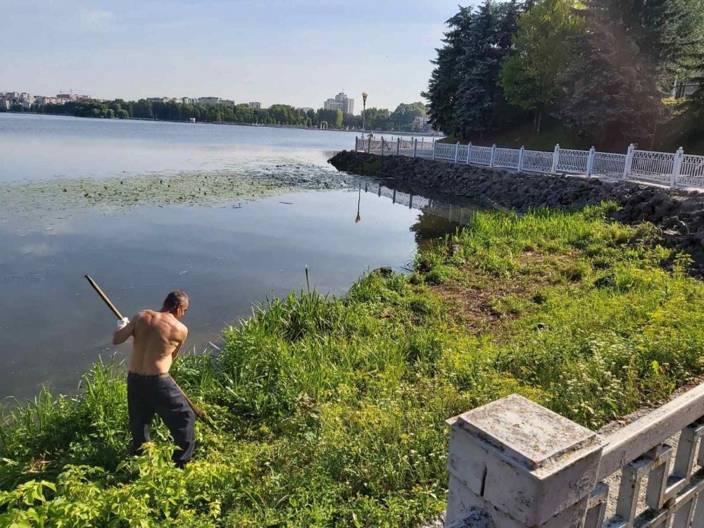 Як у Тернополі очищають став від водоростей та сміття? (ФОТО)