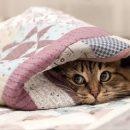 На Тернопільщині передбачають прохолодний тиждень