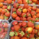 Що зіпсувало сезон полуниці на Тернопільщині?