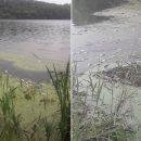 Масова загибель риби у річці на Тернопільщині: екологи б'ють на сполох (ФОТО)