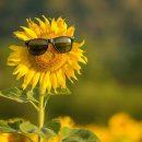 Тернополянам радять насолоджуватися літнім теплом, бо незабаром похолодає