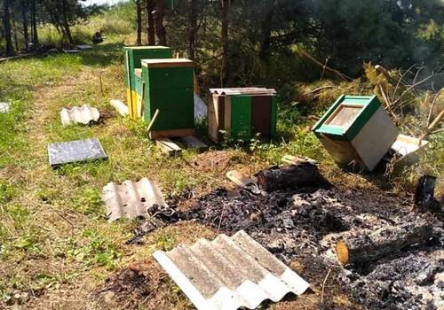 На Тернопільщині нелюди навмисне спалили пасіку із 90 вуликів