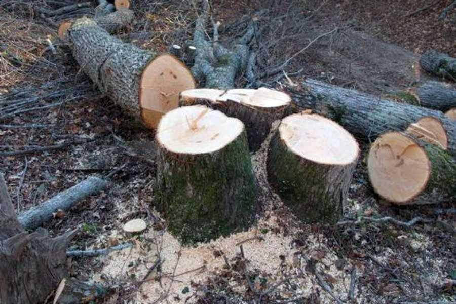 У Тернополі створять мапу зрізаних і аварійних дерев