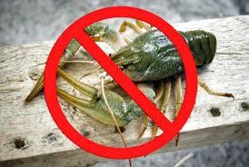 З 20 серпня у водоймах Тернопільщини забороняється вилов раків