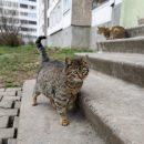 Чи мордував кошеня працівник ОСББ в Тернополі?