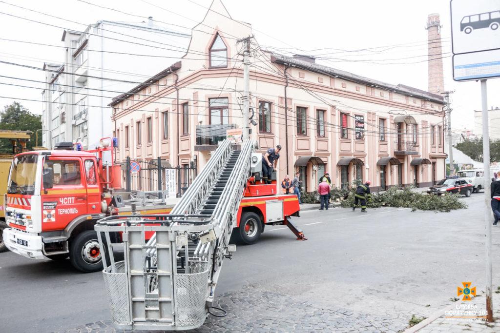 У центрі Тернополя аварійне дерево впало на дорогу (ФОТО)