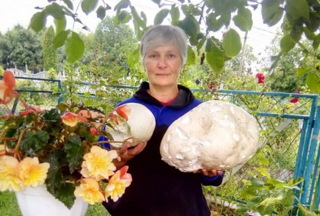 На Тернопільщині жінка вирощує індики, вагою 44 кг, збирає гриби та доглядає відбірну живність (ФОТО)