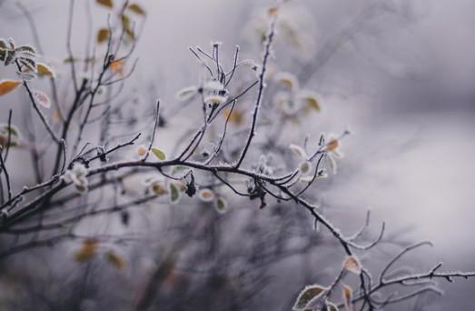 Різке зниження температури: в Україну йдуть заморозки