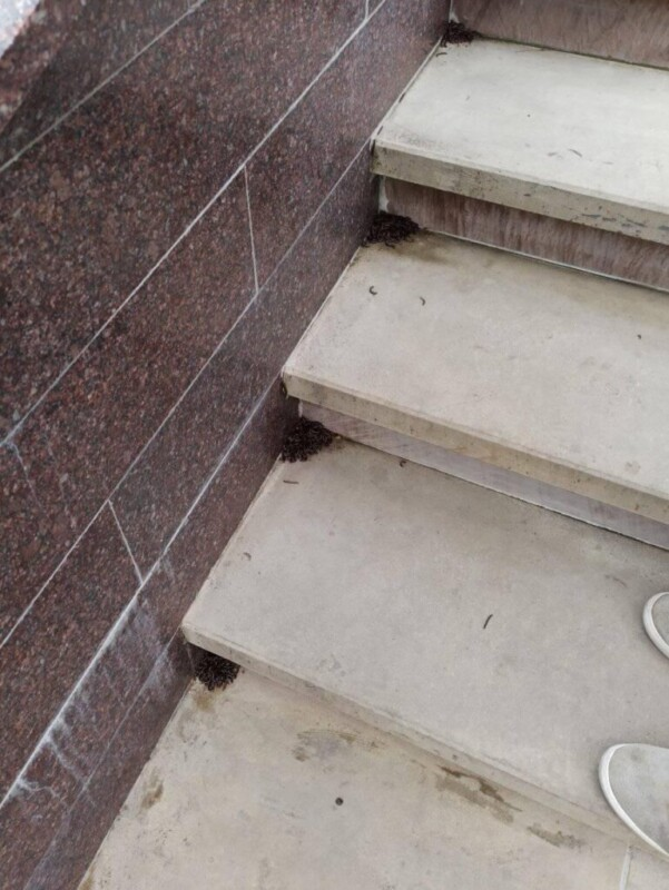 """""""Моторошні істоти"""": через погодні аномалії бридкі черв'яки окуповують під'їзди Тернополя (ФОТО)"""