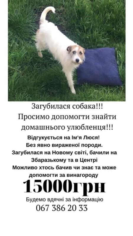 У Тернополі розшукують собаку за надзвичайно велику винагороду (ФОТО)