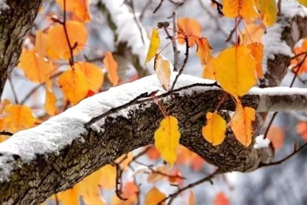 """""""Вдарять"""" морози та випаде сніг: коли в Украні чекати різкого похолодання"""