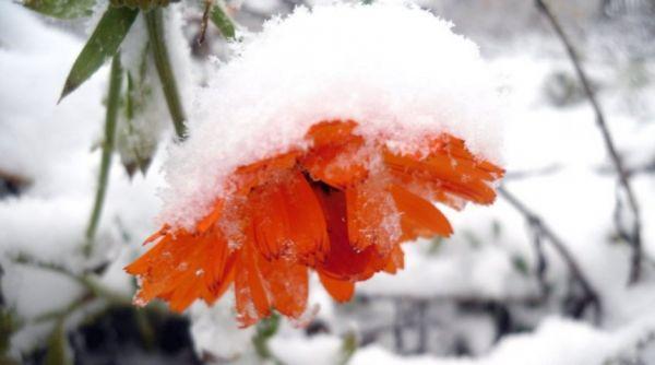 На Тернопільщину суне циклон: очікуємо мокрий сніг