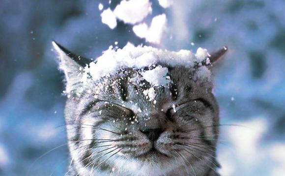 В Україну йде мокрий сніг