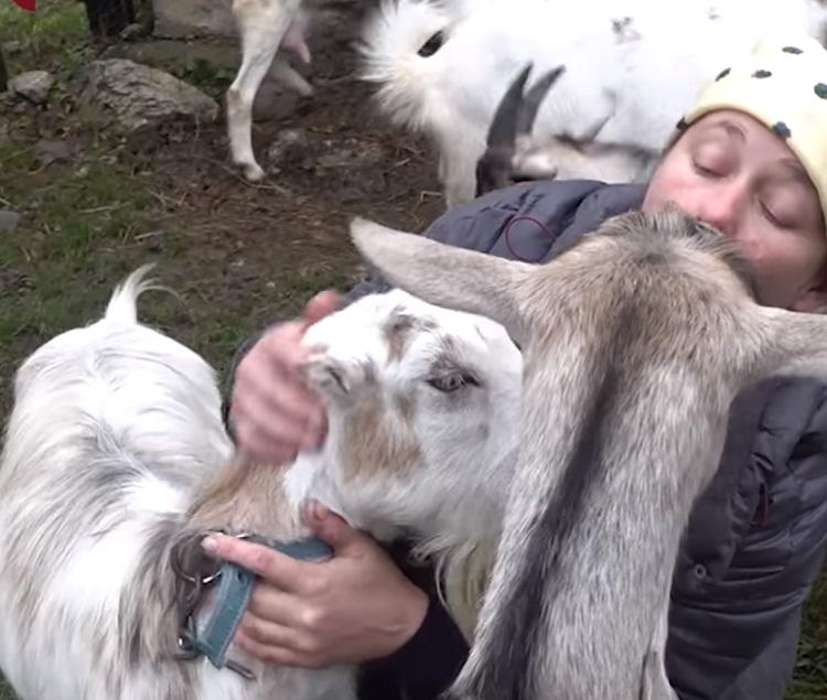 """""""Це канал """"Я і мої кози"""""""": сільська жінка з Тернопільщини стала знаменитою завдяки своїм козам (ВІДЕО)"""